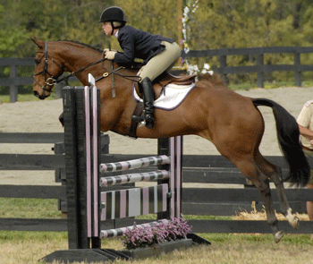 Youth competing with horse over fences