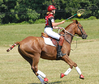 Rider and horse with ball in racquet competing in Polocrosse
