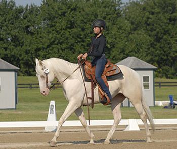 Western Dressage rider in dressage ring at a horse show